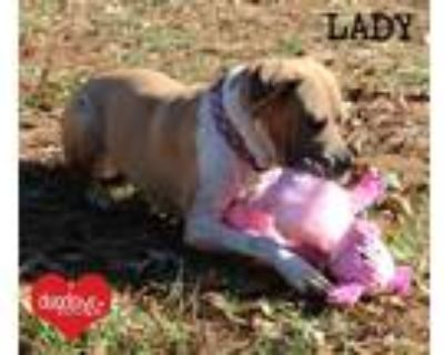 Adopt Lady a Tan/Yellow/Fawn - with White Boxer / Mixed Breed (Medium) dog in