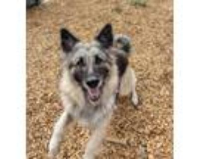 Adopt Peppermint a German Shepherd Dog / Mixed Breed (Large) / Mixed dog in