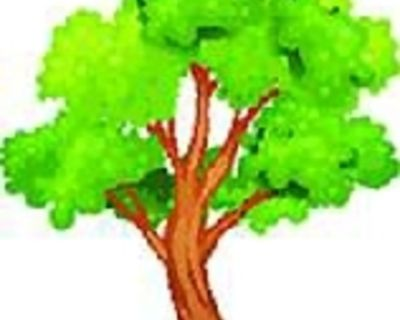 Tree Service, Tree Trimming, Removal, Moss Rock, Great Prices. Lic. (505) 818-0796