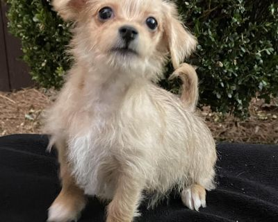 Benson 11141 - Mixed Breed (Small) - Puppy Male