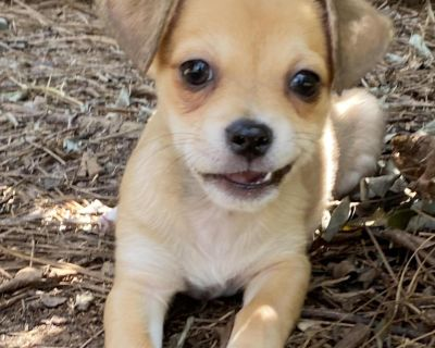 Barry 11147 - Mixed Breed (Small) - Puppy Male