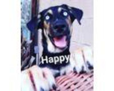 Adopt Luna a Husky, German Shepherd Dog