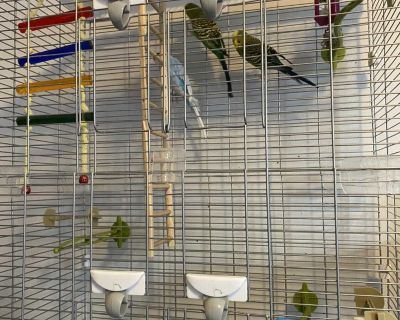 Bird cage and all accessories