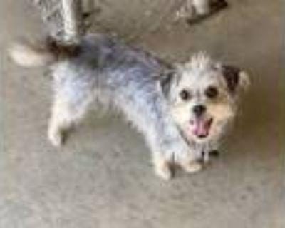 Adopt SADDEE a Terrier