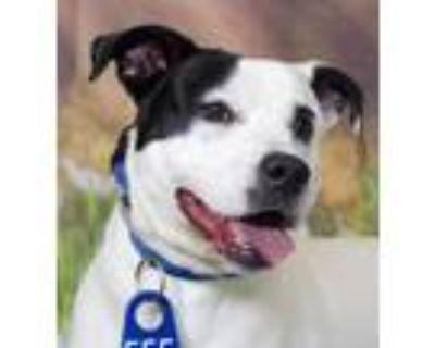 Adopt Kano (ID 30362/1492) a Labrador Retriever