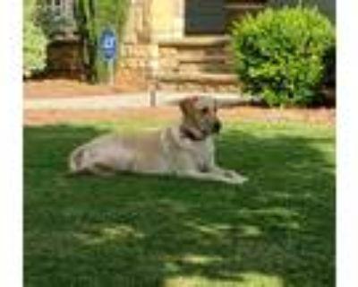 Adopt Lyla Grace a Tan/Yellow/Fawn Labrador Retriever / Mixed dog in Canton