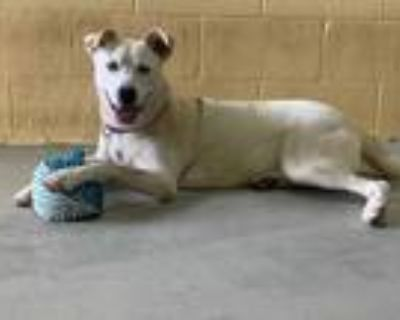 Adopt Isabelle a Husky