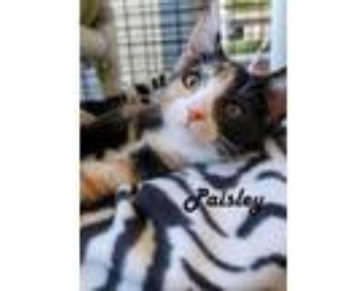 Adopt More Whis-Purr Kittens in 'Cage 1' - Phoenix, Penny, Parker
