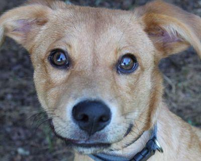 Sassy 11006 - Mixed Breed (Medium) - Puppy Female