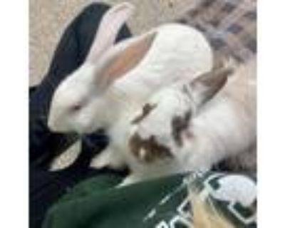 Adopt Fauna (and Flora) a Florida White