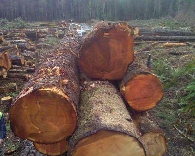 TIMBER WANTED Logging Real Estate, Tree Clearing, TRUCKS Washington