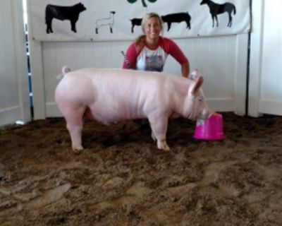 Coldwater Pig Sale