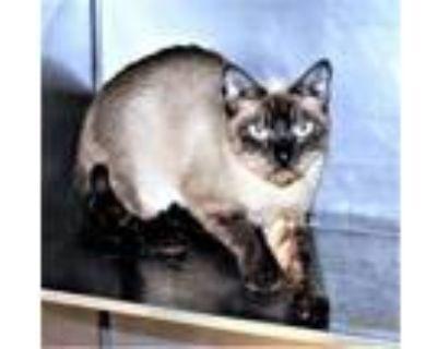 Adopt R245167 a Siamese