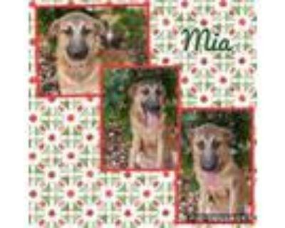 Adopt Mia a German Shepherd Dog