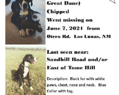 Lost dog- Reward
