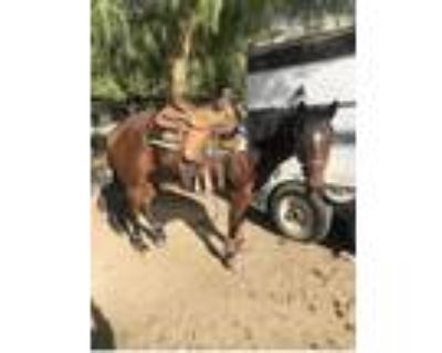 Big Price Drop for a Week 10 Year Old Mare Heel Horse