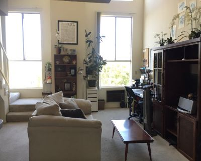 Chill Roommate Wanted
