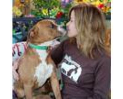 Adopt Elvis a Spaniel, Terrier