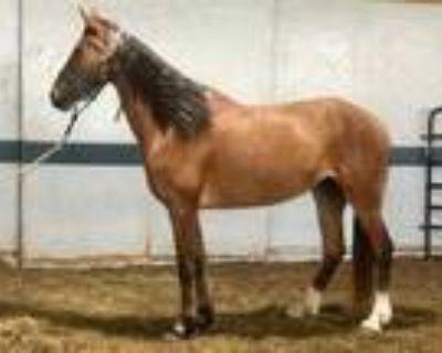Adopt Keeva a Buckskin Grade / Mixed horse in Louisville, KY (31201830)