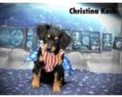 Adopt Christina Koch a Dachshund