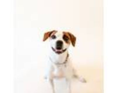 Adopt Bruce Almighty a Beagle