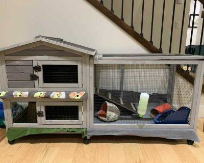 Cage and playpen, and 2 Guinea Pigs