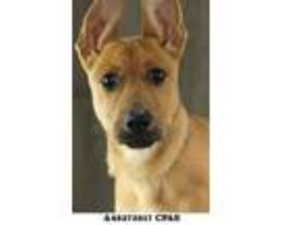 Twirl, Terrier (unknown Type, Small) For Adoption In Shreveport, Louisiana