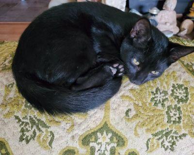 Black kittens $45
