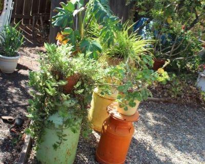 Enter an Enchanted Garden and Sift through Primitive Collectibles Galore at this Antioch Estate!