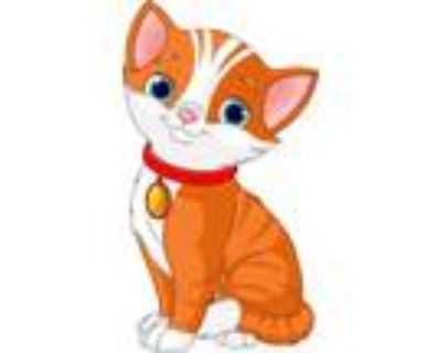 Adopt Hosea a Orange or Red Domestic Shorthair / Domestic Shorthair / Mixed cat