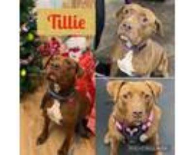 Adopt Tillie a Mixed Breed