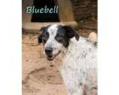 Adopt Bluebell a White - with Black Feist / Mixed dog in Shreveport