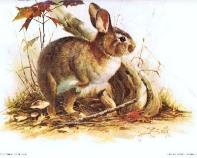 """""""Cottontail"""" Bunny Rabbit Litho - by Artist, James R. Smith - 1979 - Unframed"""