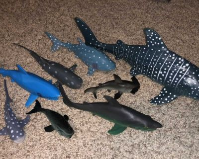 Shark Collection!