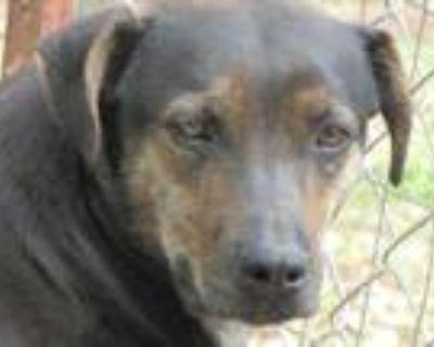 Adopt Flo a Labrador Retriever