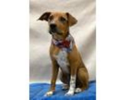 Adopt Laura-Bell a Mixed Breed, Hound
