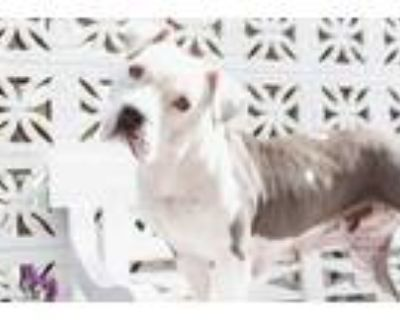 Adopt Ruthy a Pit Bull Terrier