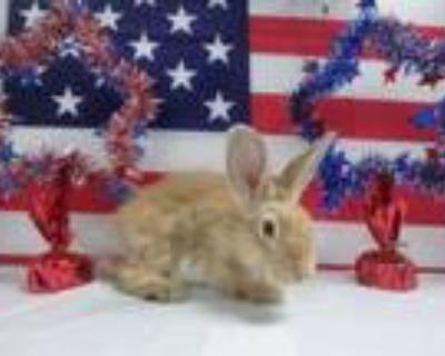 Adopt SHILO a Bunny Rabbit