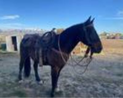 Papered quarter horse for sale