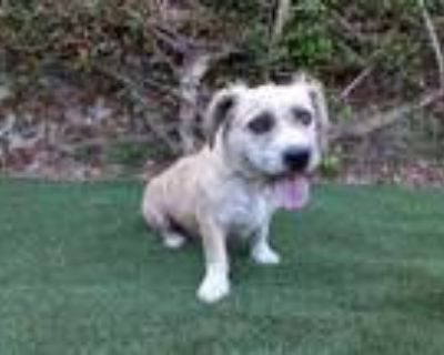 Adopt LUNA a Tan/Yellow/Fawn Mixed Breed (Medium) / Mixed dog in Van Nuys