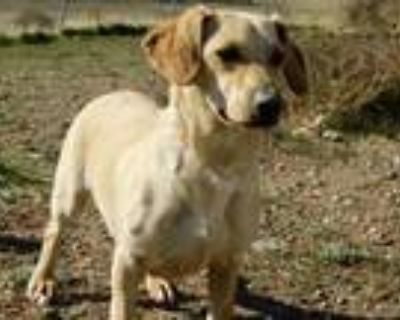 Adopt Snoop Dawg a Terrier, Basset Hound
