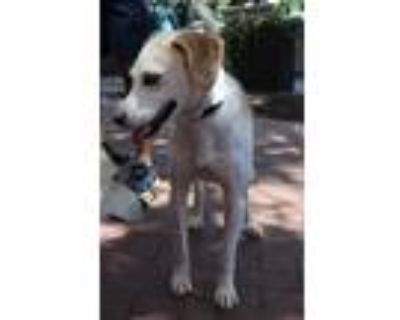 Adopt Cecil a Hound (Unknown Type) / Mixed dog in Washington, DC (31633839)