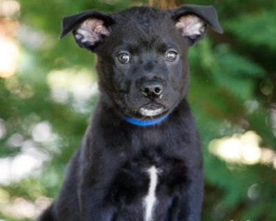 Genevieve 11104 - Mixed Breed (Large) - Puppy Female