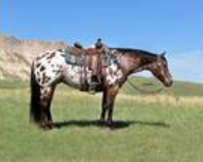 APPY RanchTrailReiningFamily Horse Twombly Horse Sale