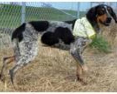 Adopt Dixie a Hound