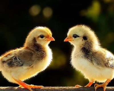 TWO CHICKS & A TAG ESTATE/MOVING SALE