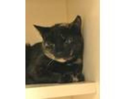 Adopt Esme a Domestic Shorthair / Mixed (short coat) cat in Portsmouth