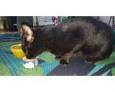 Adopt PK (Porch Kitty) a All Black Domestic Shorthair / Mixed cat in Acworth