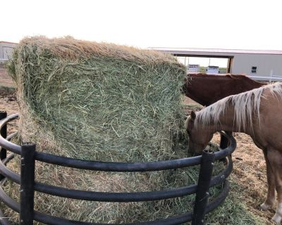 Beardless Wheat Hay Amarillo, TX