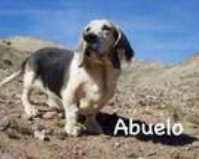 Adopt Abuelo a Basset Hound